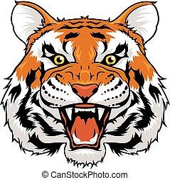 tiger, arrabbiato