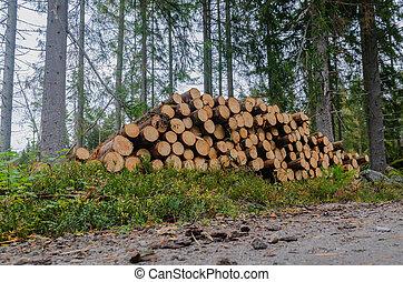 timberstack, lato strada, abete rosso, albero