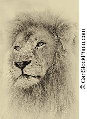 toned, leone, sepia, faccia