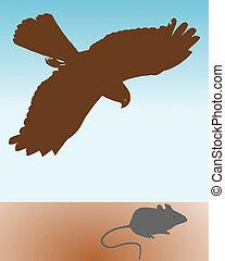 topo, preda, uccello, caccia