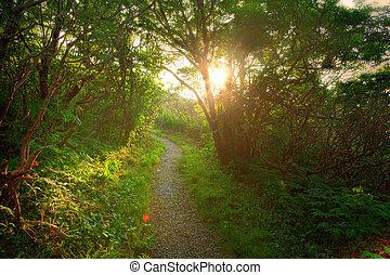 tramonto, foresta