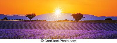 tramonto, lavanda, estate, paesaggio, campo