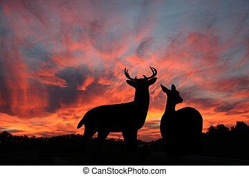 tramonto, maschio, doe, whitetail, &