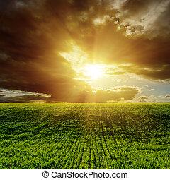 tramonto, sopra, agricolo, campo verde