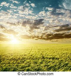 tramonto, sopra, agricoltura, campo verde