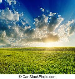 tramonto, sopra, buono, campo verde