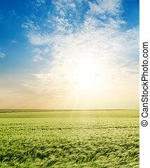 tramonto, sopra, campo verde