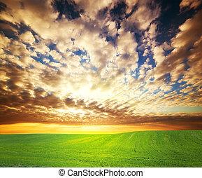 tramonto, sopra, erba, campo verde