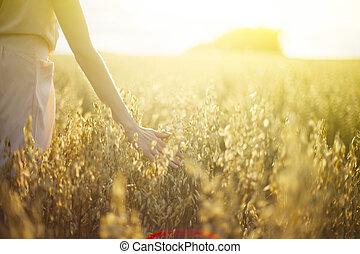 tramonto, toccante, raccoglitori, frumento, mano, sfocato