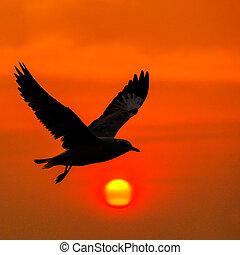tranquillo, volare, scena, gabbiano, sunse