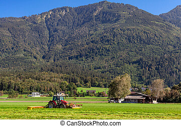 trattore azienda agricola, bestiame, erba zona, taglio, alimentazione