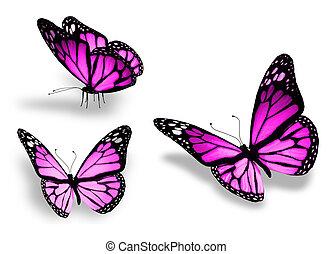 tre, isolato, fondo, viola, bianco, farfalla