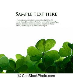 trifoglio, spazio, text., verde, mette foglie, bordo