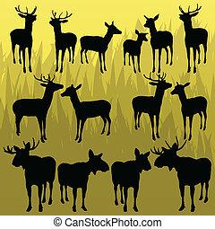trofeo, alce, animali cacciando, cervo, cornuto, vettore, illustrazione, fondo, collezione