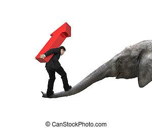 tronco, su, portante, equilibratura, freccia, elefante, uomo affari
