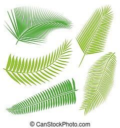 tropicale, foglie, collezione, isolare, vector.