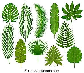 tropicale, foglie, vettore, collezione, illustrazione