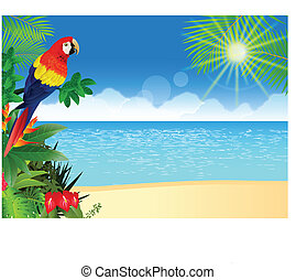 tropicale, macao, spiaggia, backgroun