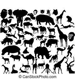 tropicale, set, animali