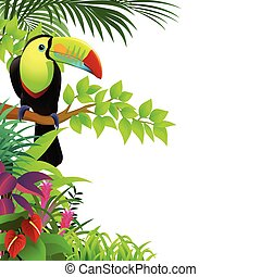 tropicale, tucano, foresta, uccello
