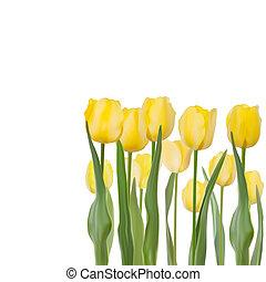 tulips, eps, isolato, fondo., 8, bianco