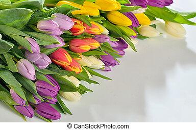 tulips, fiori bianchi, fondo