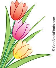 tulips, mazzo, vettore