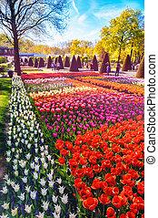 tulips., natura, primavera, multicolor, fondo, paesaggio
