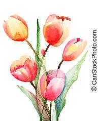 tulips, pittura, acquarello, fiori