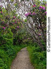 tunnel, cespugli, rododendro