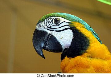 uccelli, #1