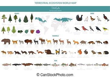 uccelli, map., ecosistema, mondo, animali, infographic, terrestre, piante, disegno, biome, fish, forest., boreal, taiga, neve
