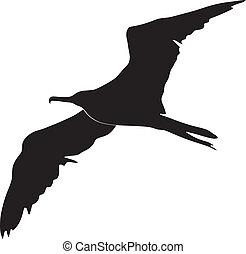 uccello fregata