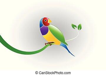 uccello, fringuello