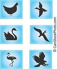 uccello, icone
