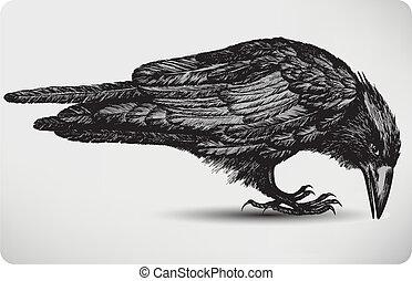 uccello, illustration., vettore, nero, hand-drawing., corvino