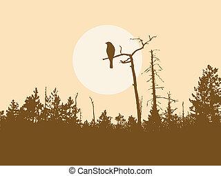 uccello, silhouette, albero