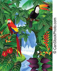 uccello, tropicale
