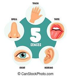 umano, concetto, sensi, cinque, organi