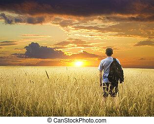 uomo, campo frumento