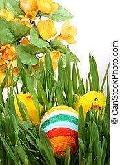 uovo, colore, pasqua, fondo