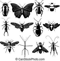 varietà, vettore, silhouette, insetto