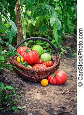 vario, pomodori, suolo