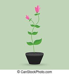 vaso, fiore, isolato, fondo