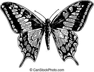 vecchio, machaon papilio, mondo, swallowtail, o