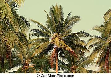 vendemmia, albero noce cocco, stile, giardini