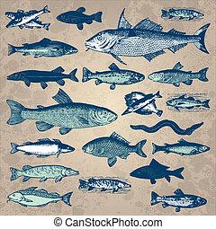 vendemmia, fish, set, (vector)