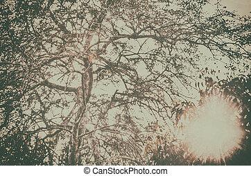 vendemmia, immagine, albero