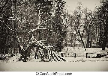 vendemmia, immagine, paesaggio inverno