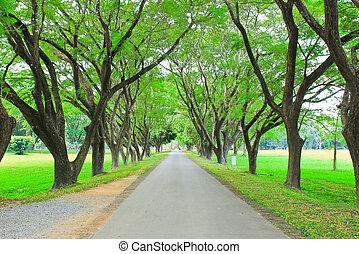verde, attraverso, strada, albero, fila